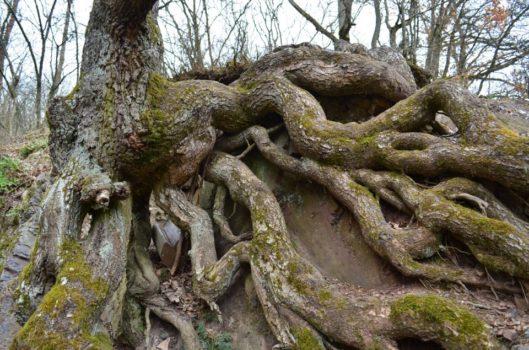 tree_ulrichhacke