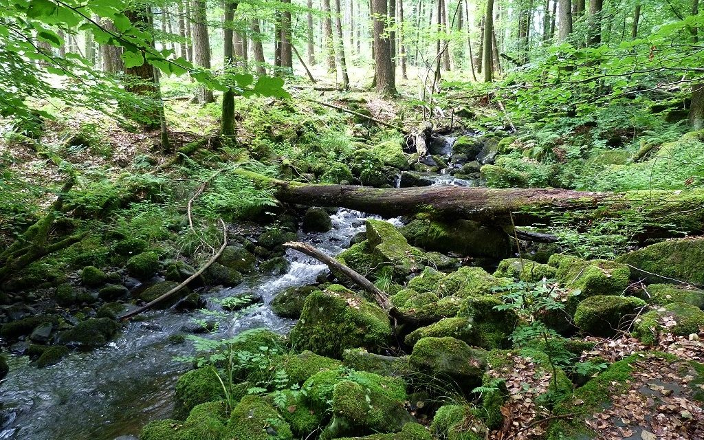 Bäume, Mythen und Entspannung beim nächsten Stammtisch im Vogelsberg