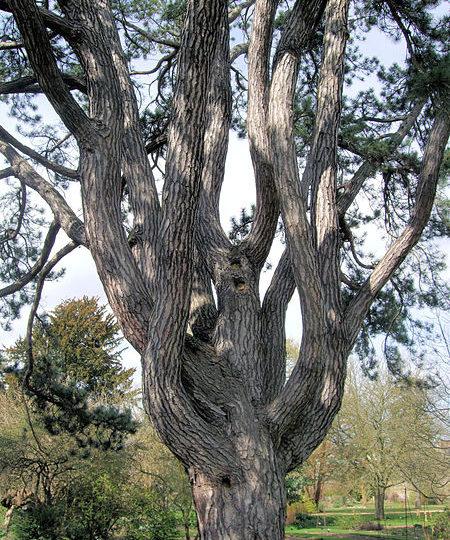 Tolkiens Lieblingsbaum wird gefällt