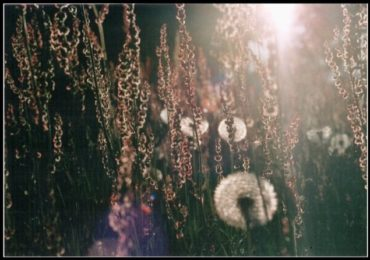 DTG-Fotowettbewerb: Yavannas Garten