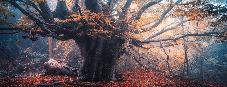 Jahre der Bäume